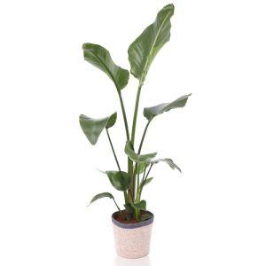 Paradijsvogel plant incl. pot