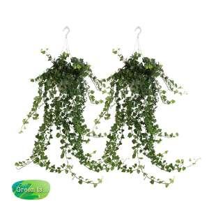 Hedera helix - klimop - hangplant - set 2 stuks bestellen of bezorgen