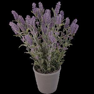 Grote zijde lavendel in pot bestellen of bezorgen