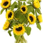Zonnebloemen incl. melkbus vaas bestellen of bezorgen