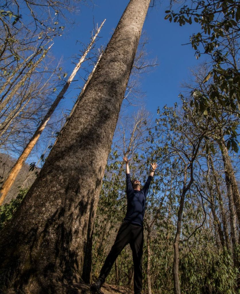 Hutch stretches with the trees while camping in the Blue Ridge Mountains.