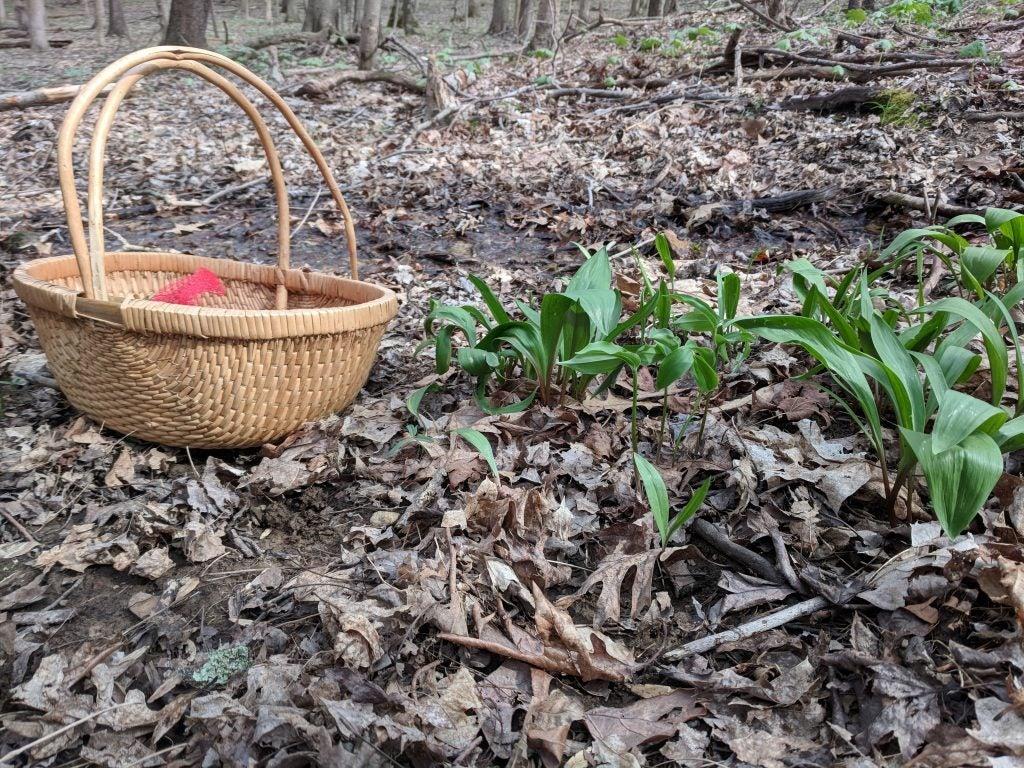 foraging for mushrooms