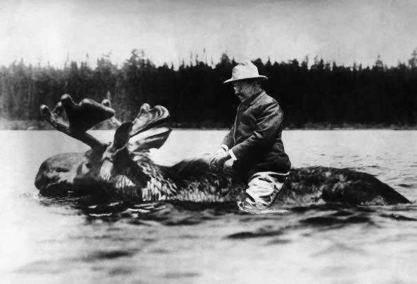 teddy roosevelt riding swimming moose