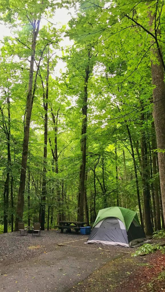 davidson river campgrounds in north carolina