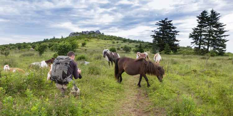 a backpacker on a trial near ponies in Grayson Highlands Virginia