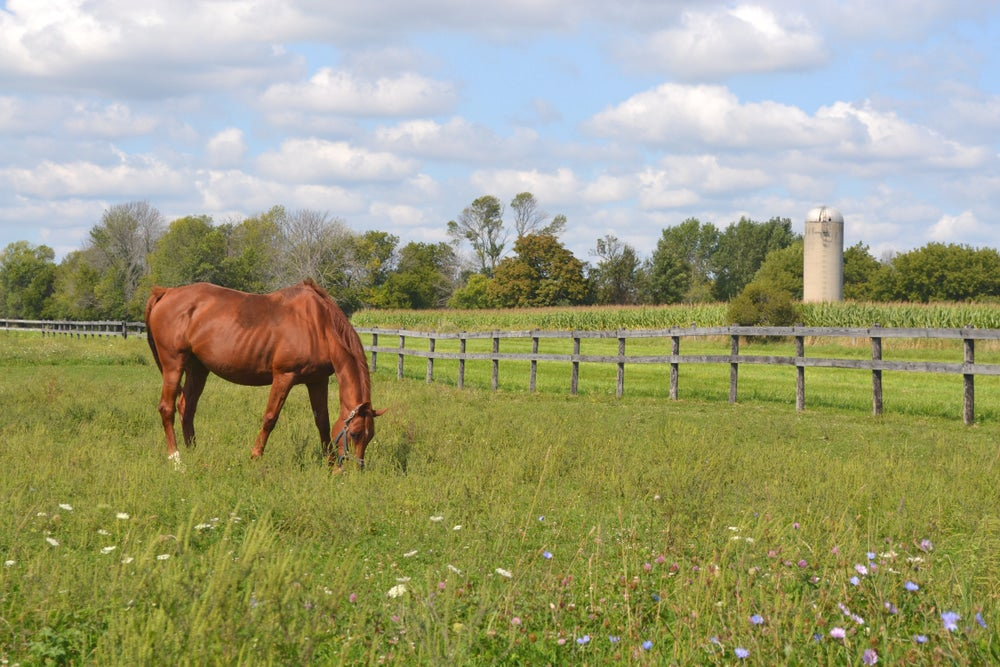 red horse grazes in tall grass surrounded by farm fencing and a silo
