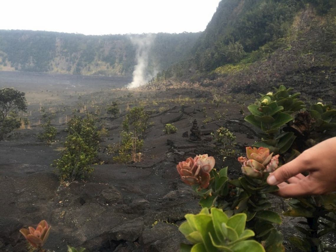 succulents growing out of black volcanic ground with steaming geothermal activity in the background.