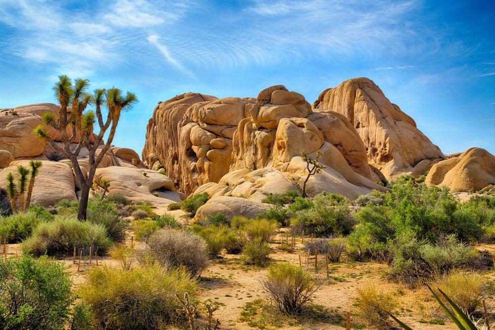 Granite rocks and desert shrubbery in Joshua Tree