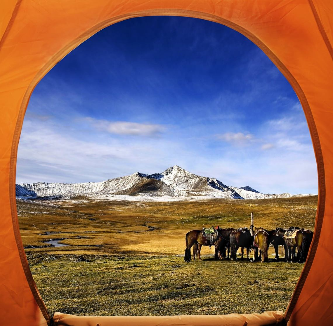 View from inside orange tent, facing into an alpine field full of grazing horses.