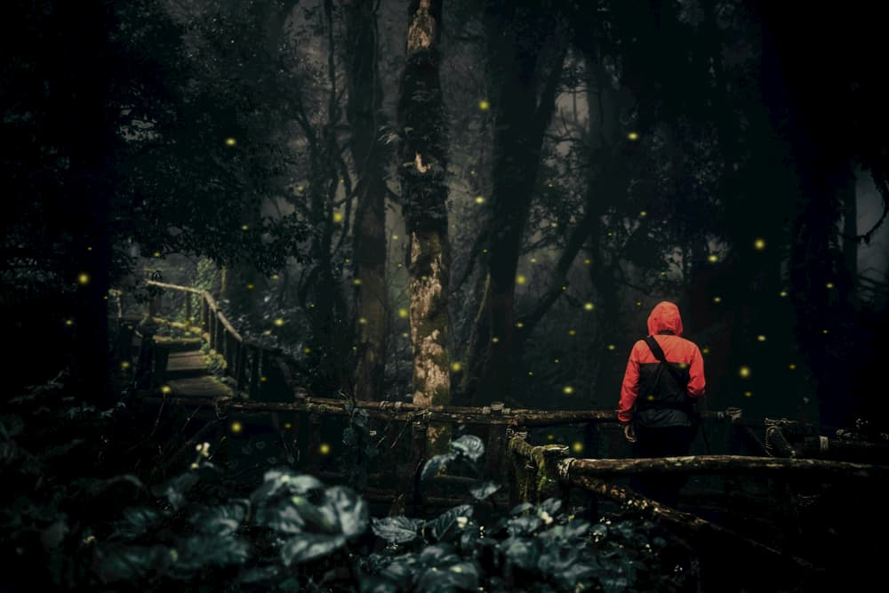 person in bright orange jacket faces away from camera toward a dark forest, surrounded by glowing fireflies