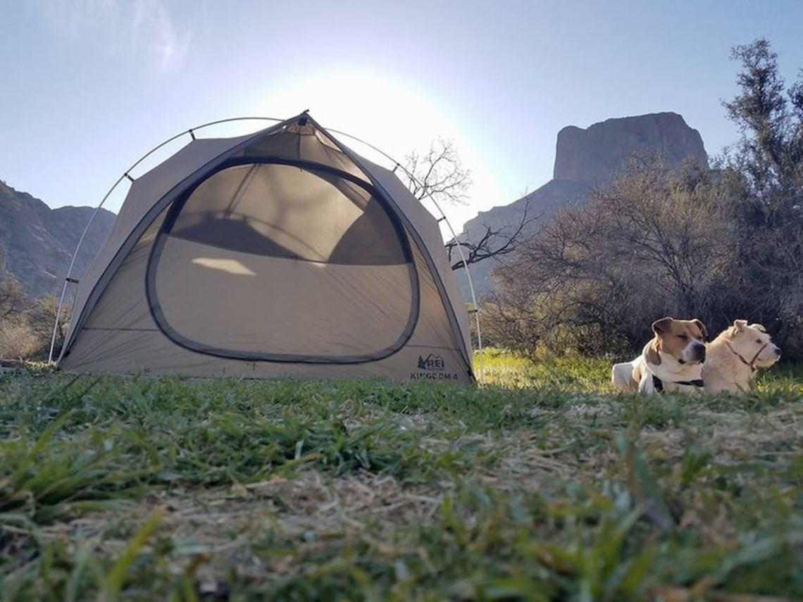 Tent set up on grass below large cliff face and beside two dogs in Big Bend.