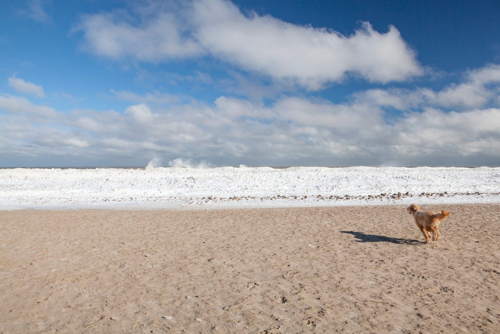 a dog running toward a frozen lake in chicago