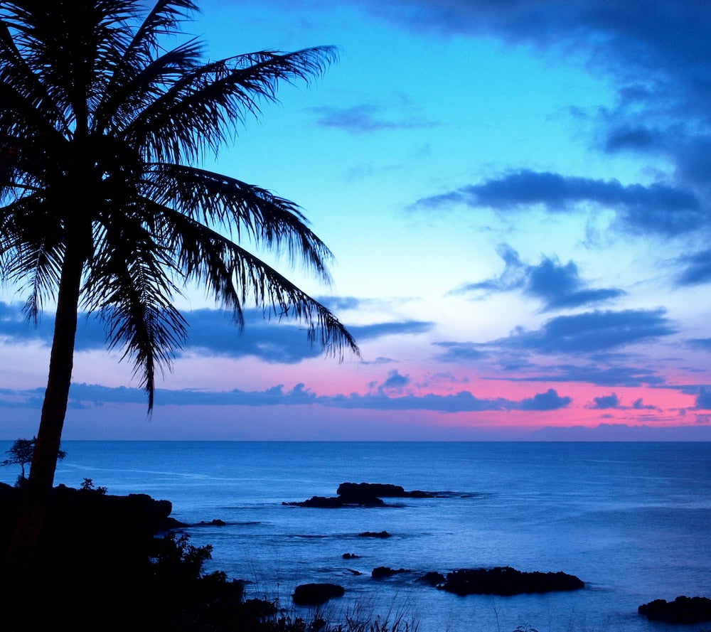 Sunset with palm tree and ocean in background