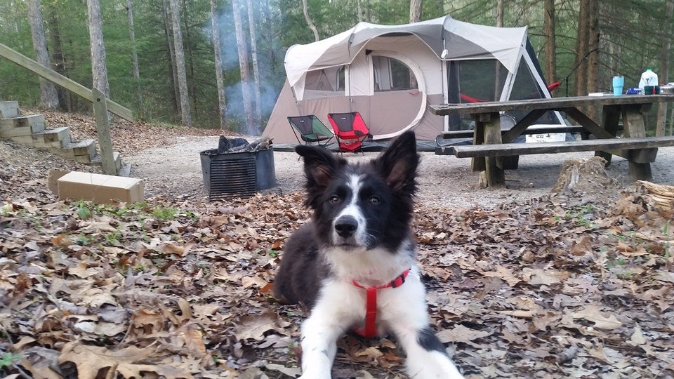 dog lays in leafy campsite featuring a large tent in Kentucky's Koomer Ridge, photo from a camper on The Dyrt