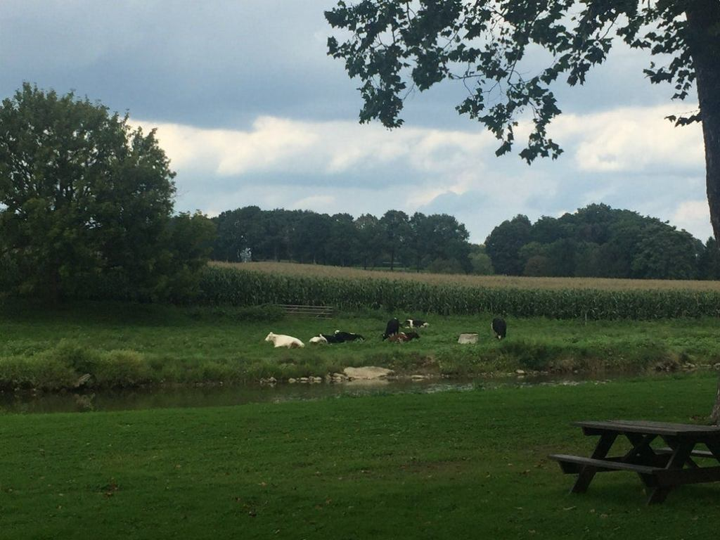 a campsite across a river from a farm with cows and corn