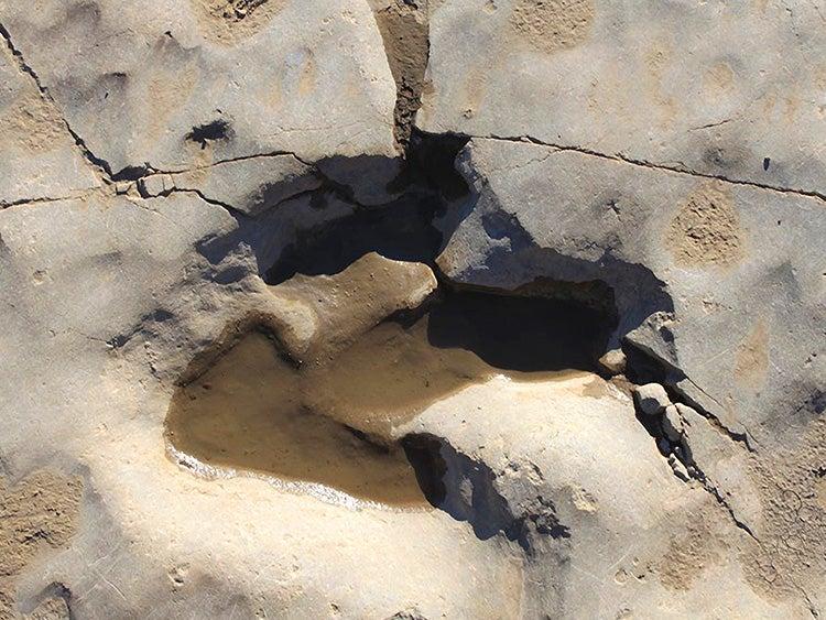 dinosaur footprint in picketwire canyonlands colorado