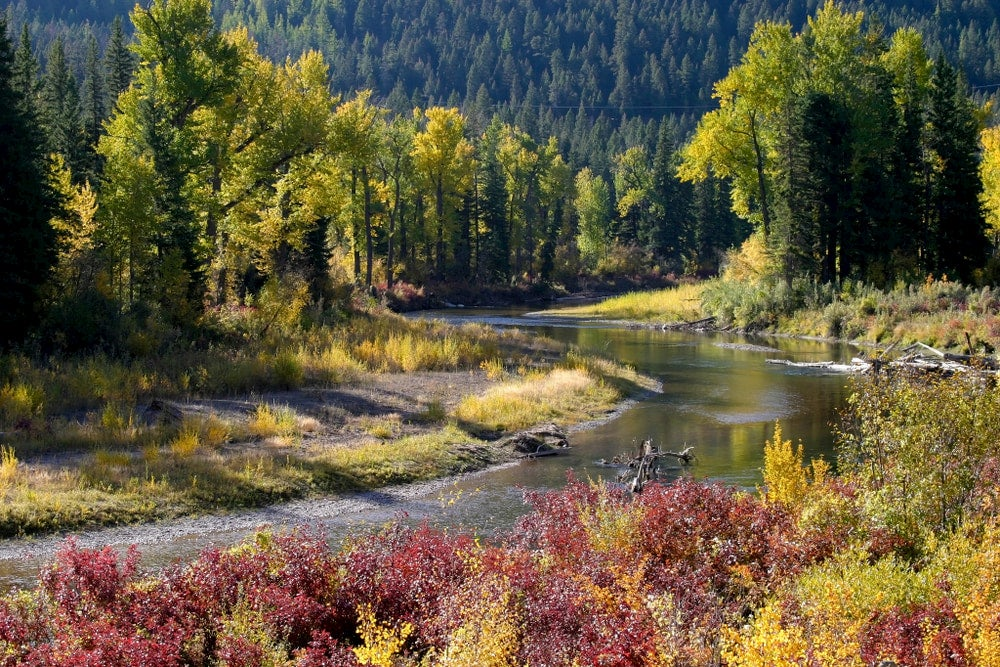 Blackfoot river in Montana with fall foliage in background