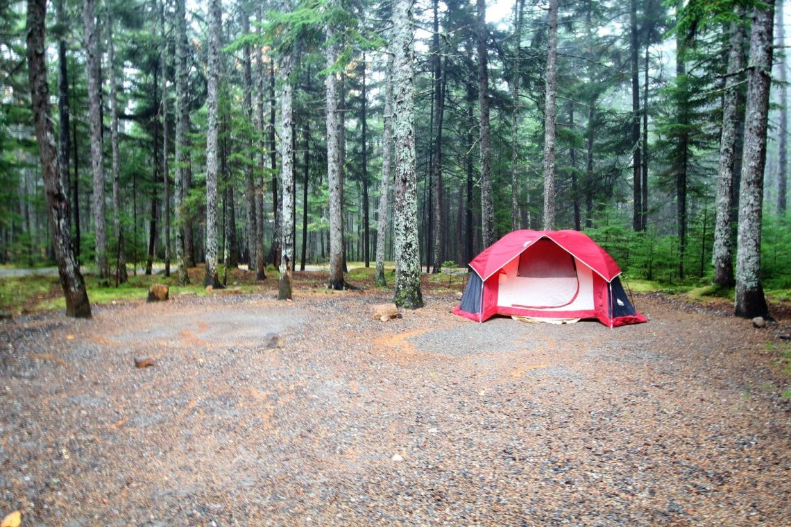 Red tent pitched in large campsite in the middle of a foggy forest.