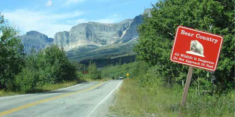 a bear warning sign in glacier national park