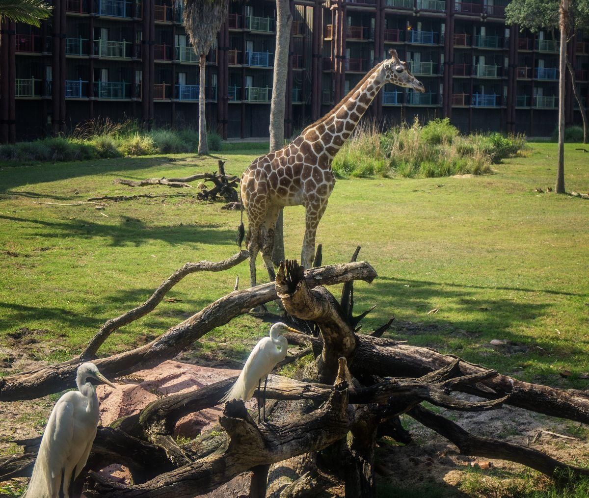 Theme Park Ticketless Options Viewing Animals On The