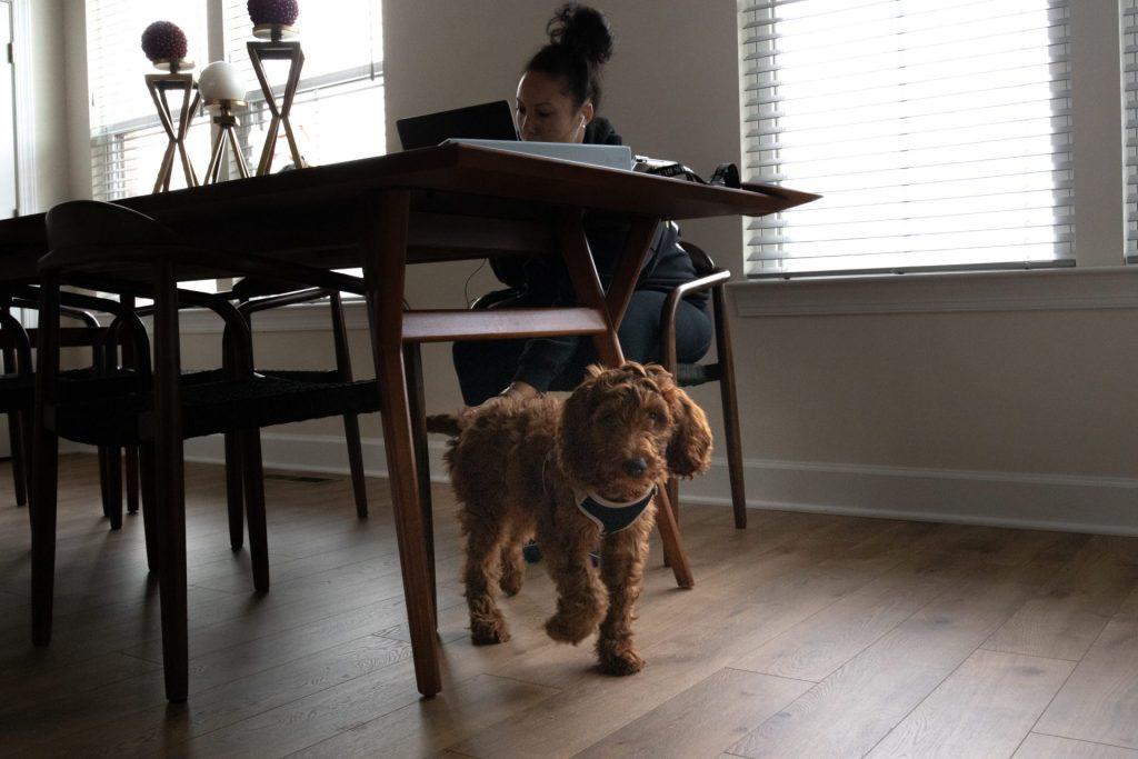 Pessoa trabalhando em home office em uma mesa com o seu cachorro
