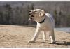 The Dog Bark Collars