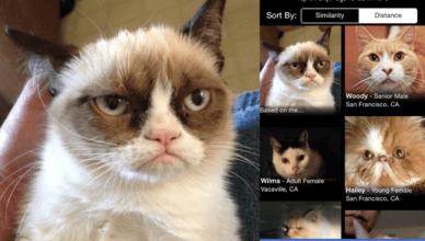Découvrez PetMatch pour trouver l'animal de compagnie idéal