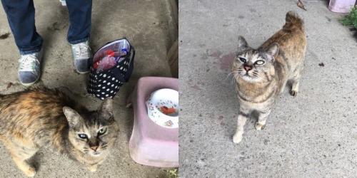 cat_84724_1S.jpg