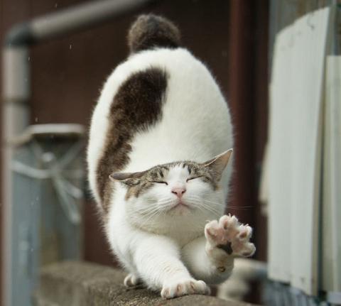 tokyo-stray-cat-photography-busanyan-masayuki-oki-japan-a50.jpg