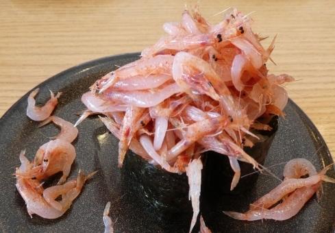 sakura shrimp_6534658
