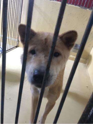 宮崎県収容犬17-11-22-009