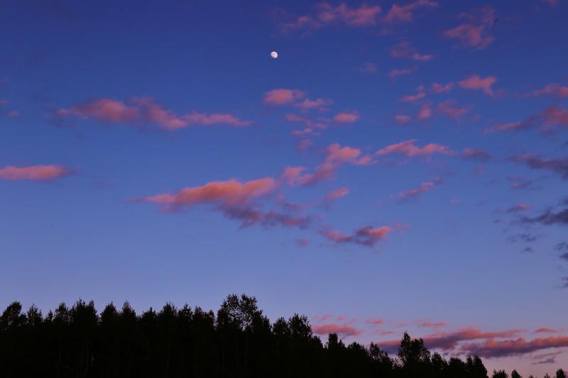 月とから松