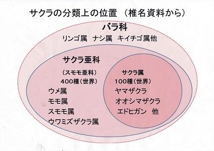 世界の桜!日本の桜!東大和市の桜!2