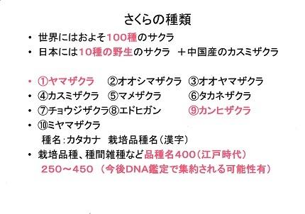 世界の桜!日本の桜!東大和市の桜!3