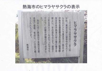 世界の桜!日本の桜!東大和市の桜!6