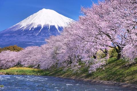 cherry-blossom-sample-image_1490.jpg
