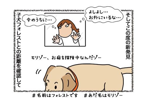 07022019_dog4.jpg