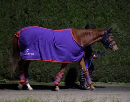 【競馬新馬】ステイゴールド最後の子・ハルノナゴリがデビュー