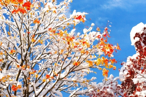 fall_snow786786.jpg