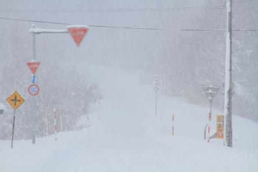 snow68787.jpg