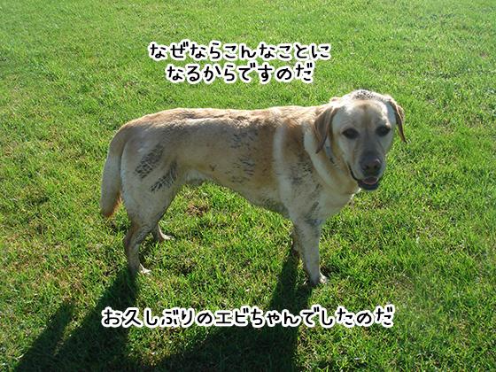 27032019_dog5.jpg