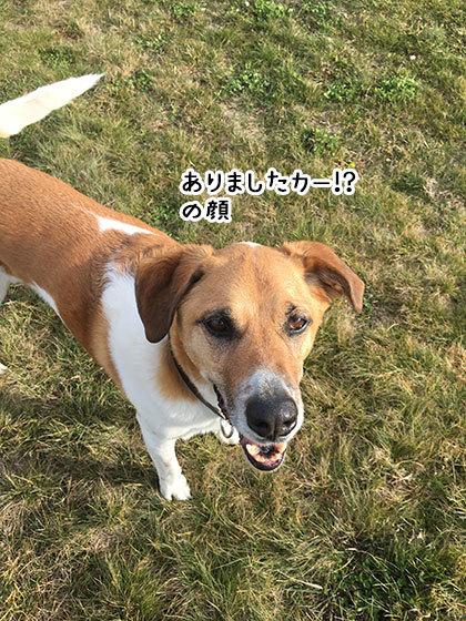 10062019_dogpic3.jpg