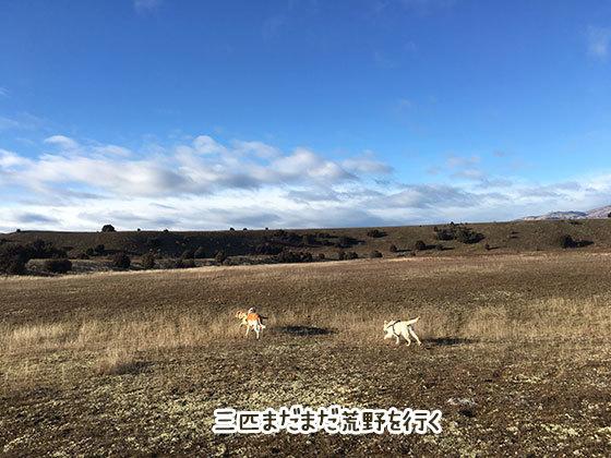 18062019_dogpic3.jpg