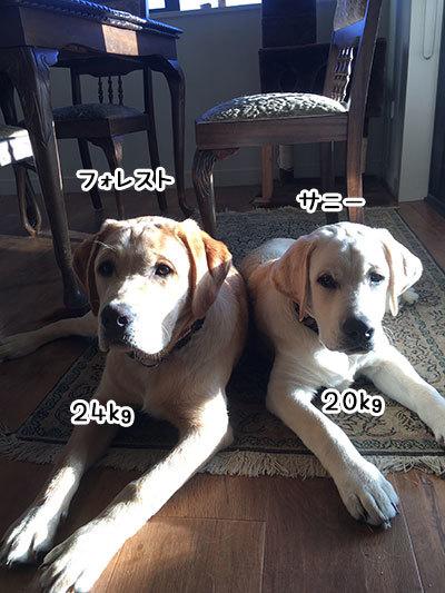 26042019_dog1.jpg