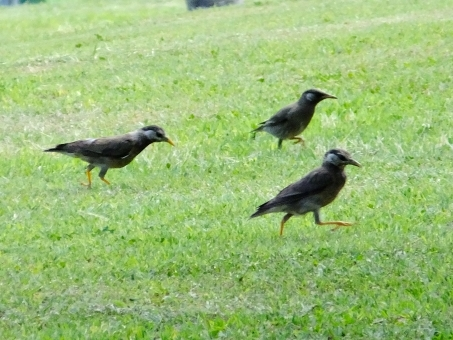 bird78578.jpg