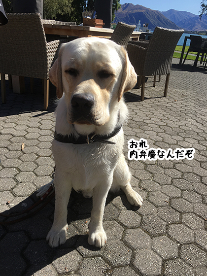 29022020_dogpic2.jpg