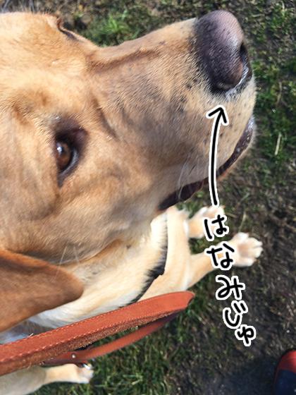 07072020_dogpic1.jpg