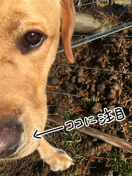 07072020_dogpic2.jpg