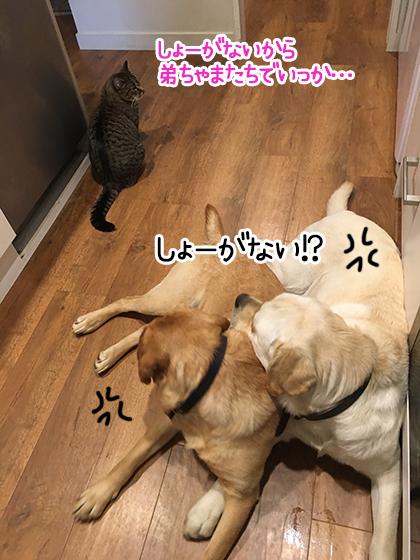 07102020_dogpic2.jpg