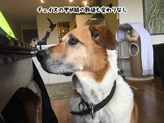 17072020_dogpic3.jpg